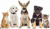 Mascotas, animales de compañía