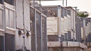 Criadero-de-macacos-para-experimentacion-animal-en-Camarles-Tarragona.