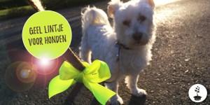 Geel lintje voor honden die afstand willen