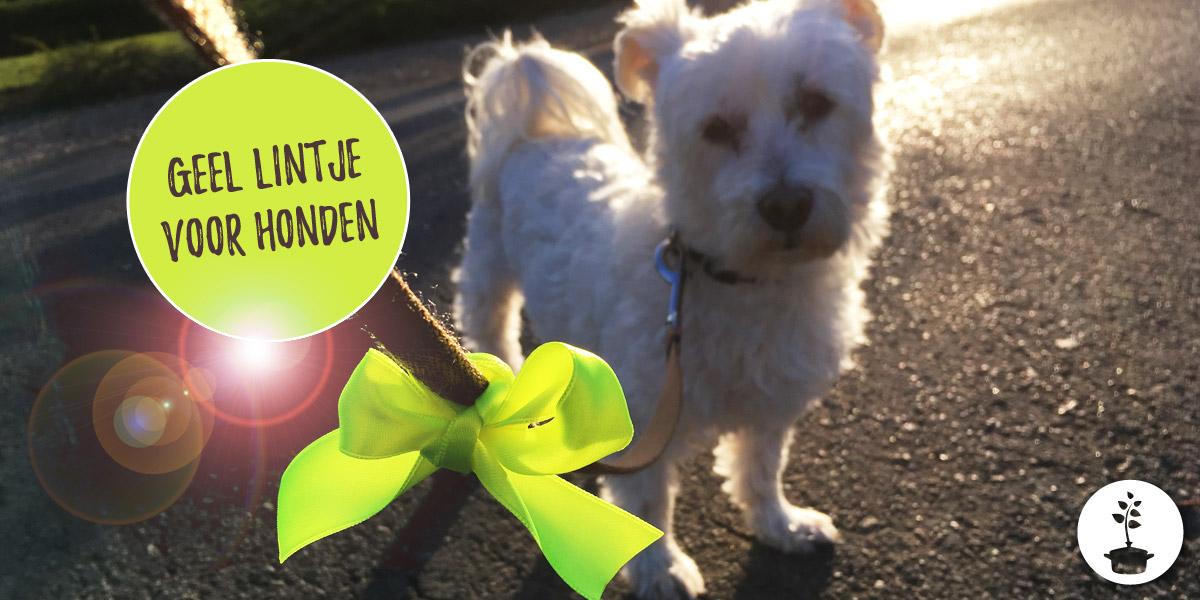 Waarom dragen sommige honden een geel lint aan hun leiband?