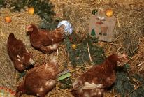 Tierpate Weihnachten2
