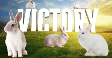 Avon ends animal testing thanks to PETA