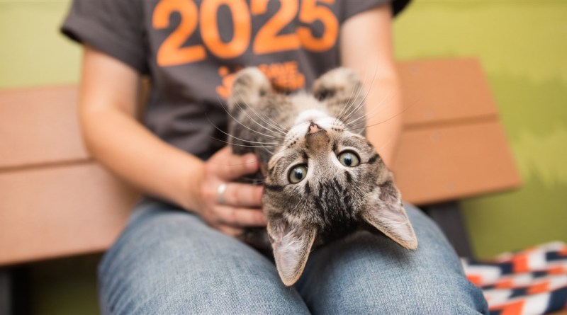 Delaware is the first no-kill shelter state in the United States