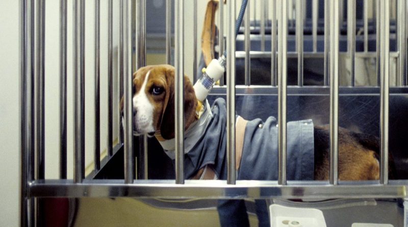 "In a moment of ""Why wasn't this already a thing?"" the Food and Drug Administration (FDA) has finally created its first policy that will allow animals that have been tested on in lab experiments to be adopted"