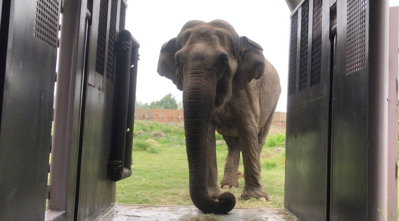 Judge wishes she could declare Bronx Zoo native Happy the elephant as a person to end her lonely confinement.