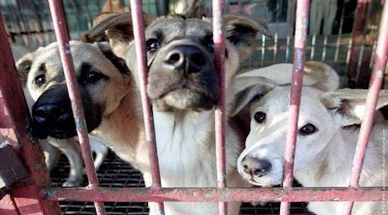 """Suspected to have emerged from the so-called """"wet markets"""" in Wuhan China COVID-19 AKA the Coronavirus cursed a litany of temporary bans on the consumption of dogs, cats, and wildlife throughout many cities in China including Beijing and in Shenzhen as we previously reported."""