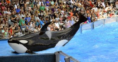 SeaWorld has been failing financially for many years due to pressure from animal rights activists and organizations like PETA. Now PETA is offering SeaWorld a quarter of a million dollars to assist the company in building a seaside sanctuary in which to retire their current prisoners.