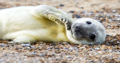 Scotland has taken a huge leap forward with its new bill that has now become law banning the killing of seals by fishermen.