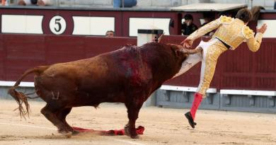 Bogotá Columbia has banned bullfighting after passing measures to restrict the cruel spectacle that makes it pointless to try and stage a fight.