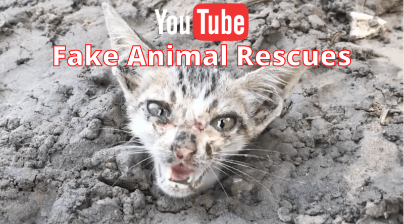 Youtube's fake animal rescue channels and videos must be stopped befor more innocent kittens, puppies and other animals die.