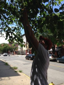 Wild Mulberry Tree Brooklyn   Vegan Nom Noms