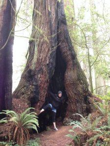 Giant Redwood Crescent City California | Vegan Nom Noms