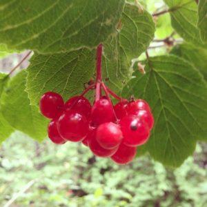 Highbush Cranberry Alaska | Vegan Nom Noms