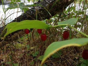 Watermelon Berries Alaska | Vegan Nom Noms