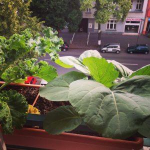 Collards and Kale Balcony