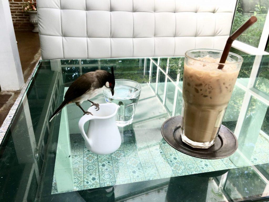 bird drinking my almond milk at art roastery and cafe