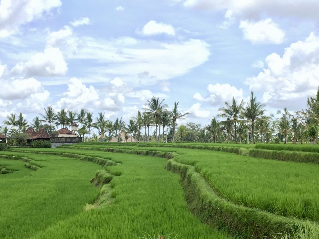 Ubud Cycling Tour View from Lunch