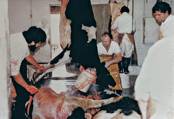 Modern Animal Farming  Vegan Outreach