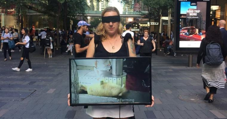 Vegan Activism – The Cube of Truth