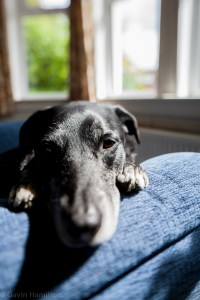 My dog on his armchair
