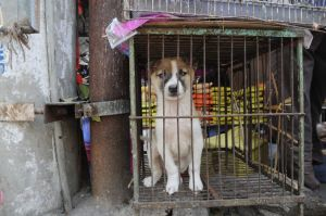 Dog in cage in Asia. Jo-Anne McArthur/We animals