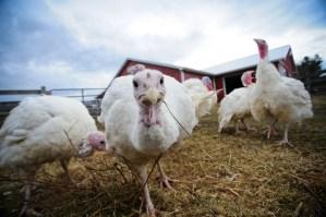 Rescued Chickens. Jo-Anne McArthur/We Animals