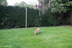 At home in a suburban garden