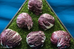 Red cabbage is better than green
