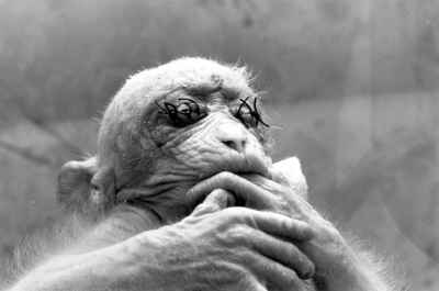 8 dôvodov, prečo testovanie na zvieratách nepomáha ľuďom