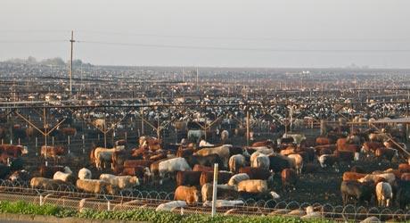 Prečo prestať jesť živočíšne produkty – Fakty