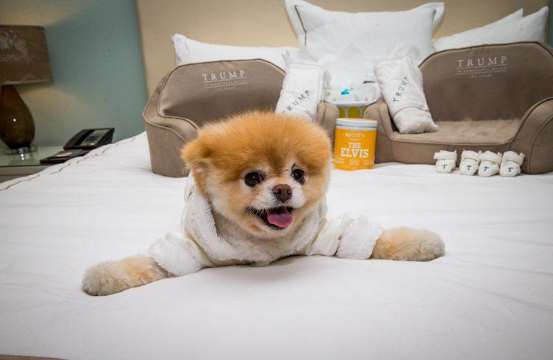 Pet World Dog Beds