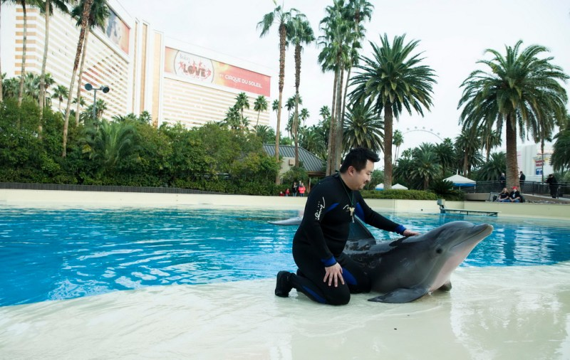 "Surprise Winner Enjoys Dolphin Habitat's ""Trainer for a Day"" at The Mirage Hotel & Casino - LVCVA"