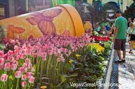 Bellagio Botanical Garden Spring, Las Vegas