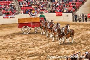 Clydesdales Budweier show at South Point Casino, Las Vegas