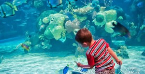 Kid watching the fish in the aquarium at Silverton hotel