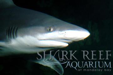 Shark Reef Aquarium at Mandalay Bay, Las Vegas