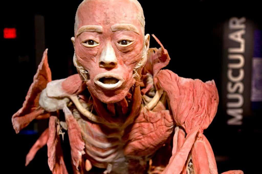 Bodies...the Exhibition at Luxor - Best Las Vegas Museums