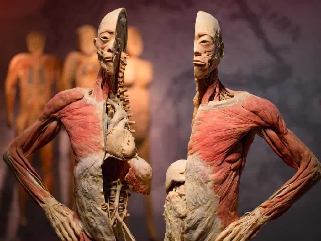 REAL BODIES - Best museums in Las Vegas