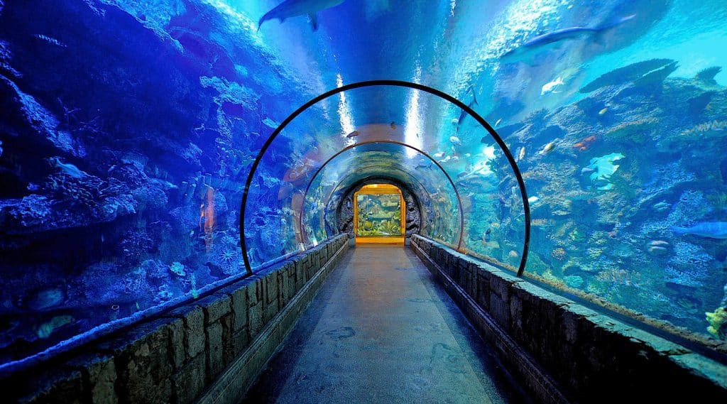 Shark Reef at Mandalay Bay - Romantic things to do in Las Vegas