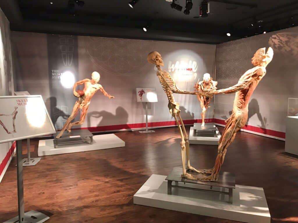 Real Bodies at Bally's - Things to do in Las Vegas on the Strip