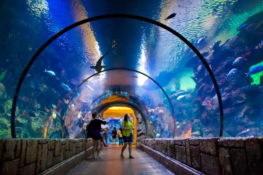 Shark Reef Aquarium - Things to do in Vegas with Kids