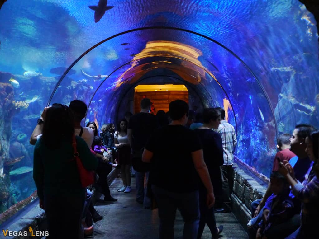 Shark Reef Aquarium - Kids birthday parties in Las Vegas