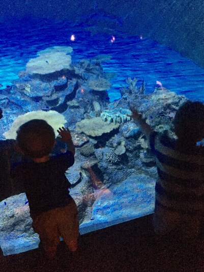 Two small boys with their hands on the shark tank glass watching small fish