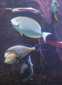 Golden Nugget Shark Pool Vegas Mavens