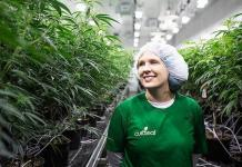 Curaleaf Dispensary Recruiting Cannabis Advocates for Jobs in Ely, Nevada