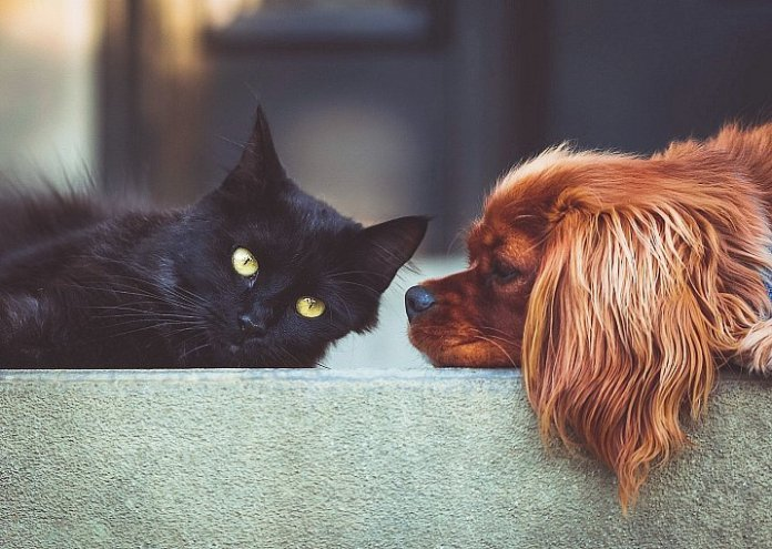Dog people vs Cat People: Are They Really Different?