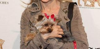 Poker Is Going to the Dogs (and other animals) with Jennifer Harman Celebrity Poker Tournament to Benefit the Nevada SPCA