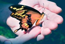 """Nathan Adelson Hospice to Hold 16th Annual """"Celebration of Life"""" Live Butterfly Release"""
