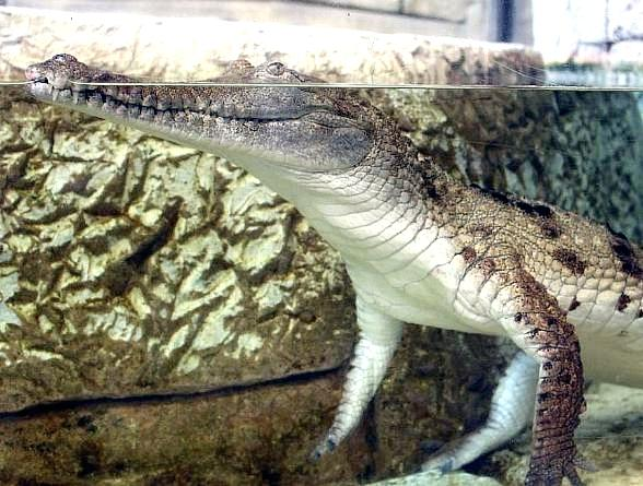 New Species Welcomed at Mandalay Bay's Shark Reef Aquarium in Las Vegas