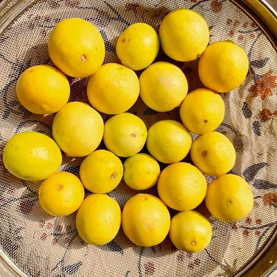 lemons drying up in sun for the pickle